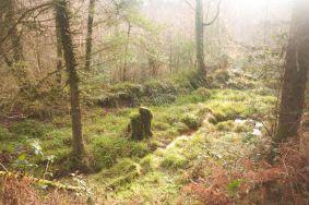 Vale of Clara (Photo: Paul Smyth)