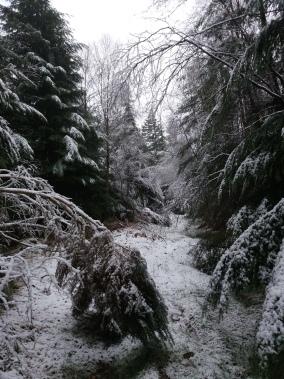 Vale of Clara Dec '17 (Photo: Aonghus O'Cleirigh)